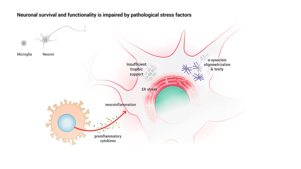 Neuronal survival and functionality is impaired by pathological stress factors